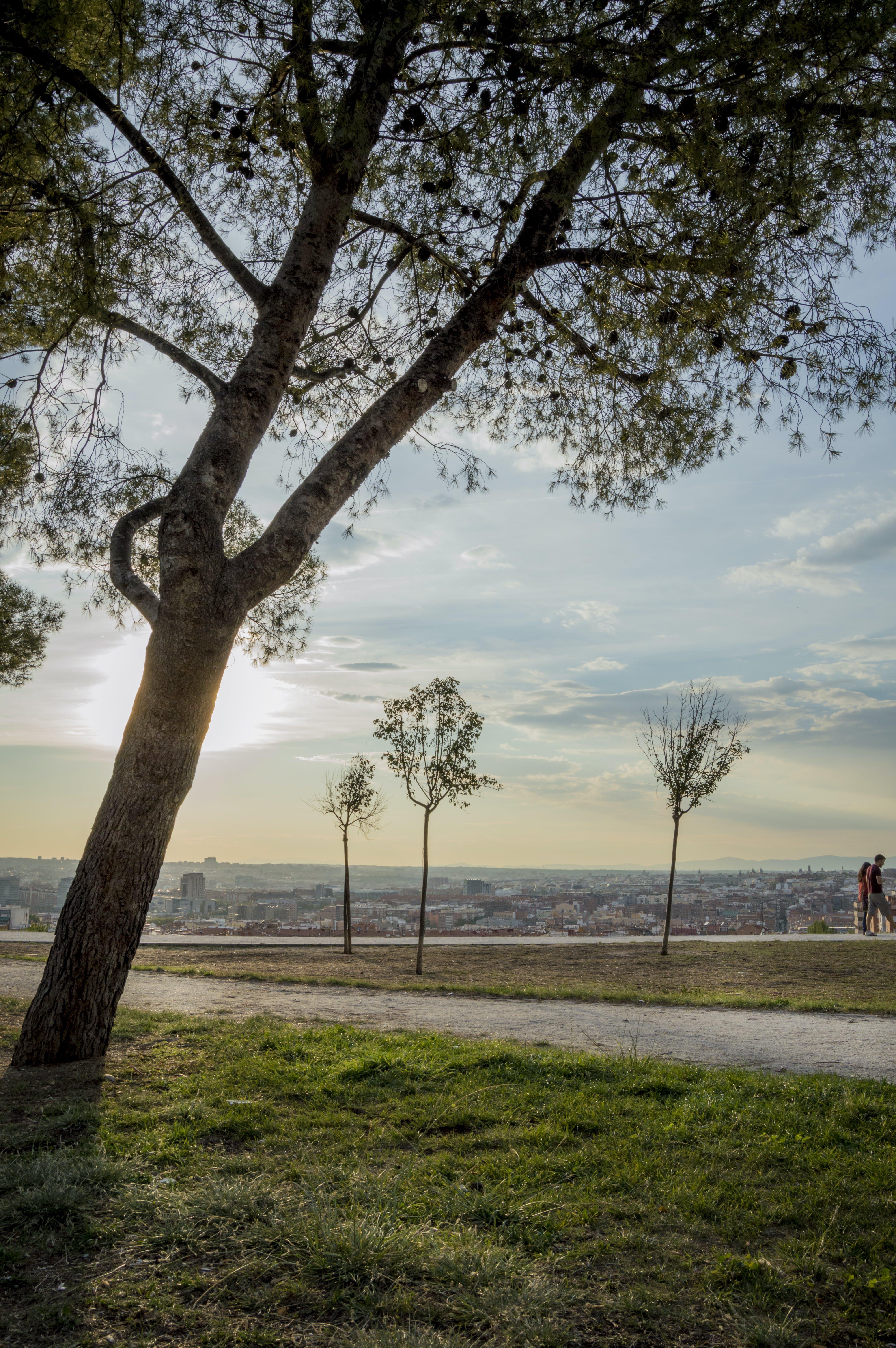 Free stock photo of city park, trees