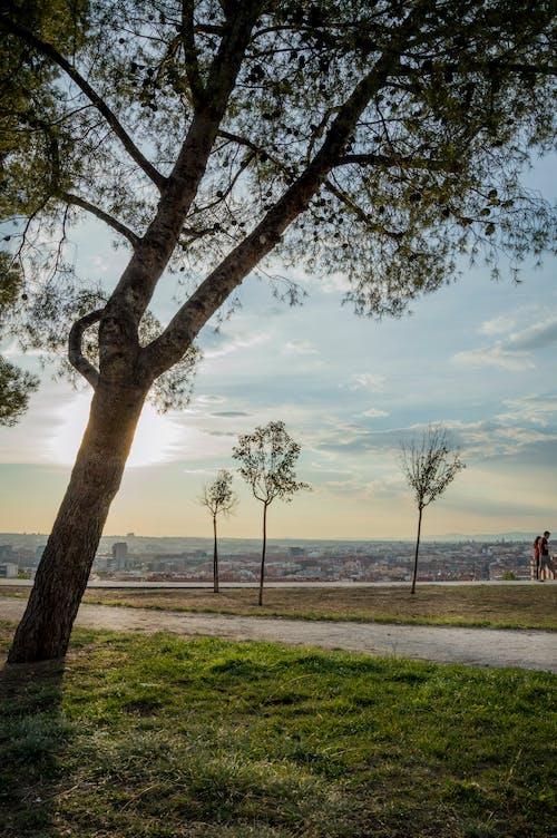 คลังภาพถ่ายฟรี ของ ต้นไม้, สวนเมือง