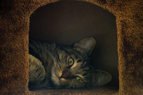 Základová fotografie zdarma na téma kočka