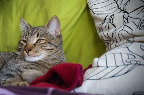 คลังภาพถ่ายฟรี ของ แมว