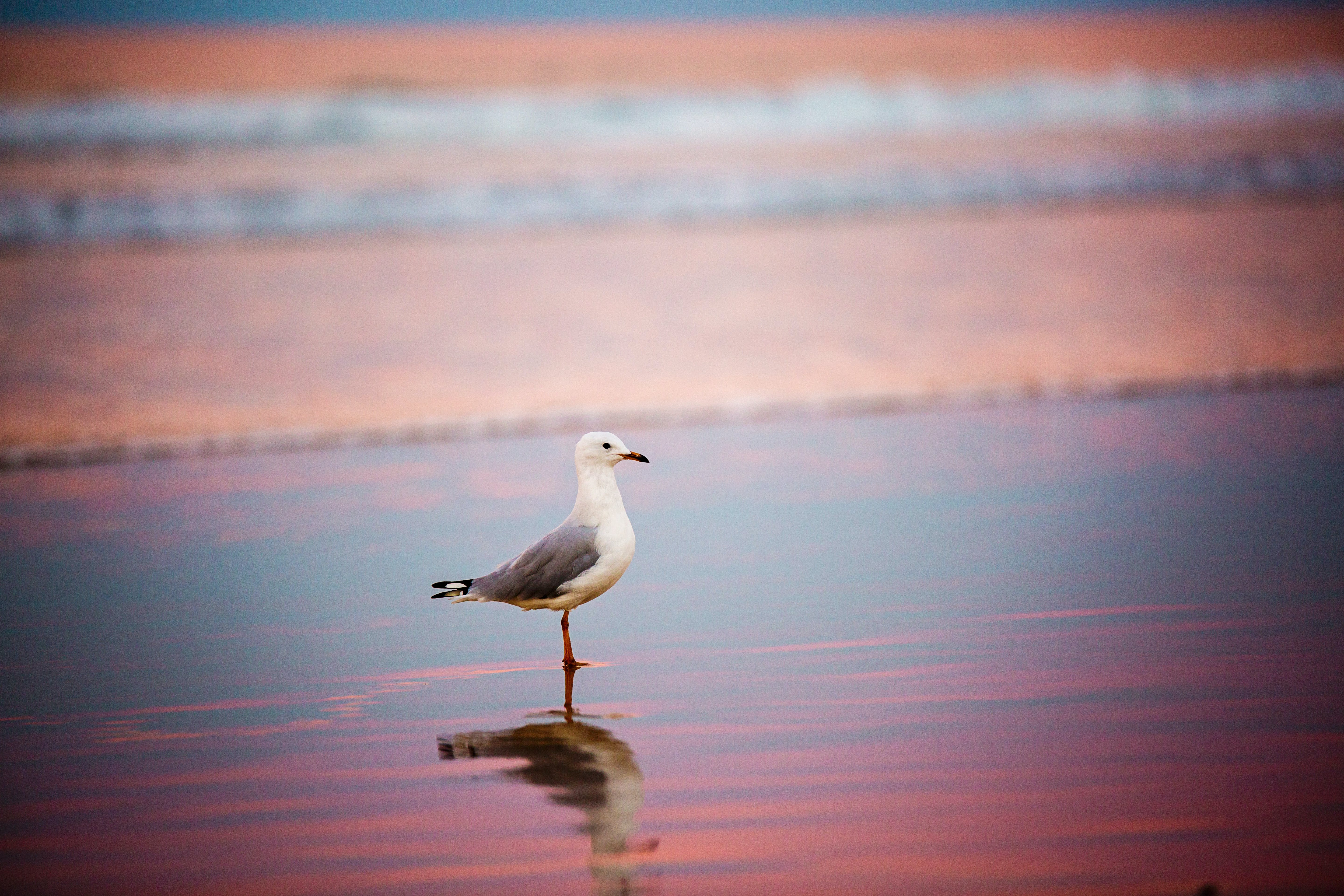 Selective Focus Photography of Ring-billed Gull on Shore