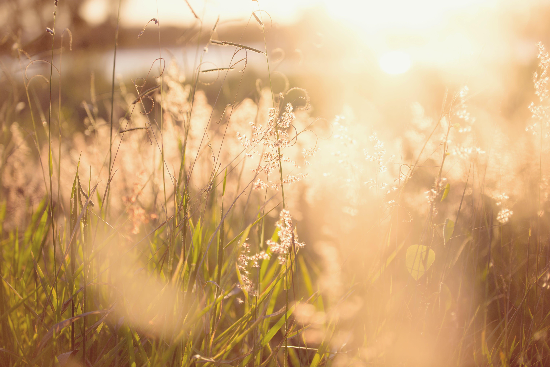 夏天, 太陽眩光, 景觀, 模糊 的 免費圖庫相片