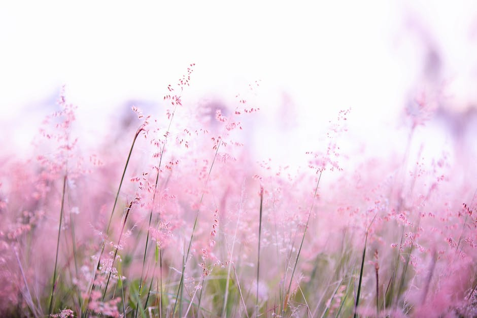 Pink flowers photography