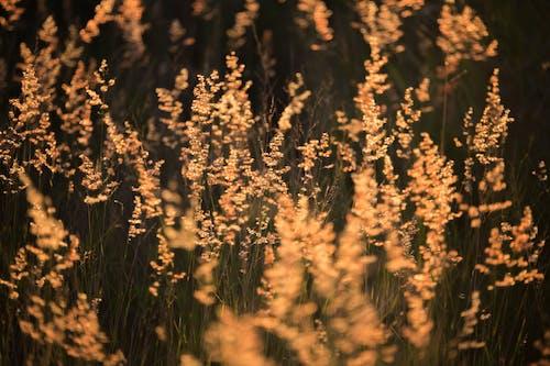 Ingyenes stockfotó fű, gyárak, homály, környezet témában