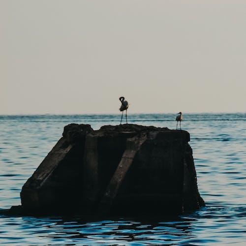doğa fotoğrafçılığı, Fotoğraf, fotoğrafçı, fotoğrafçılık ekipmanı içeren Ücretsiz stok fotoğraf
