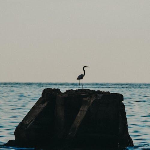 doğal, fotoğrafçılık, gün batımı, hayvan fotoğrafçılığı içeren Ücretsiz stok fotoğraf