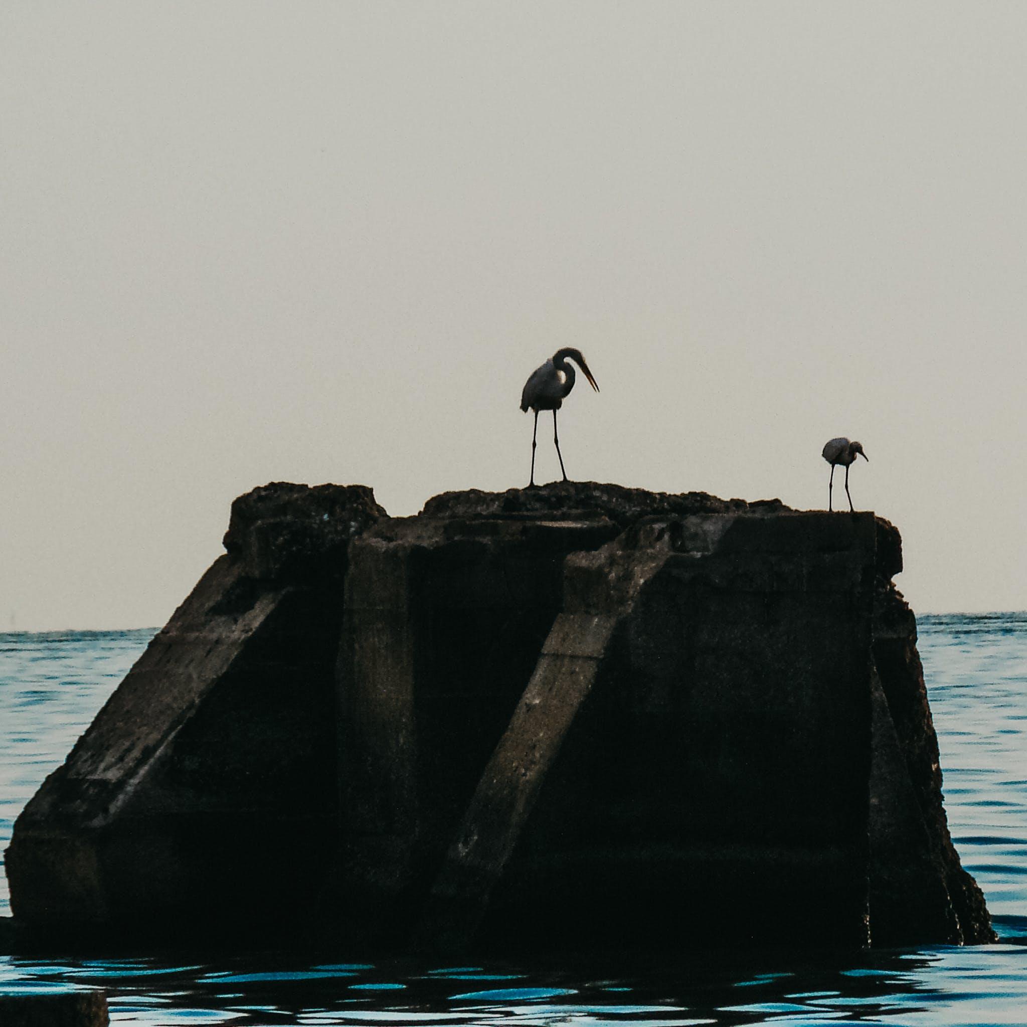 Foto d'estoc gratuïta de aus aquàtiques, capvespre, foto, fotògraf