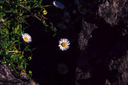 Безкоштовне стокове фото на тему «квіти, квітка, чорний»