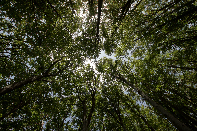 Foto d'estoc gratuïta de arbres, bosc, foto amb angle baix, natura