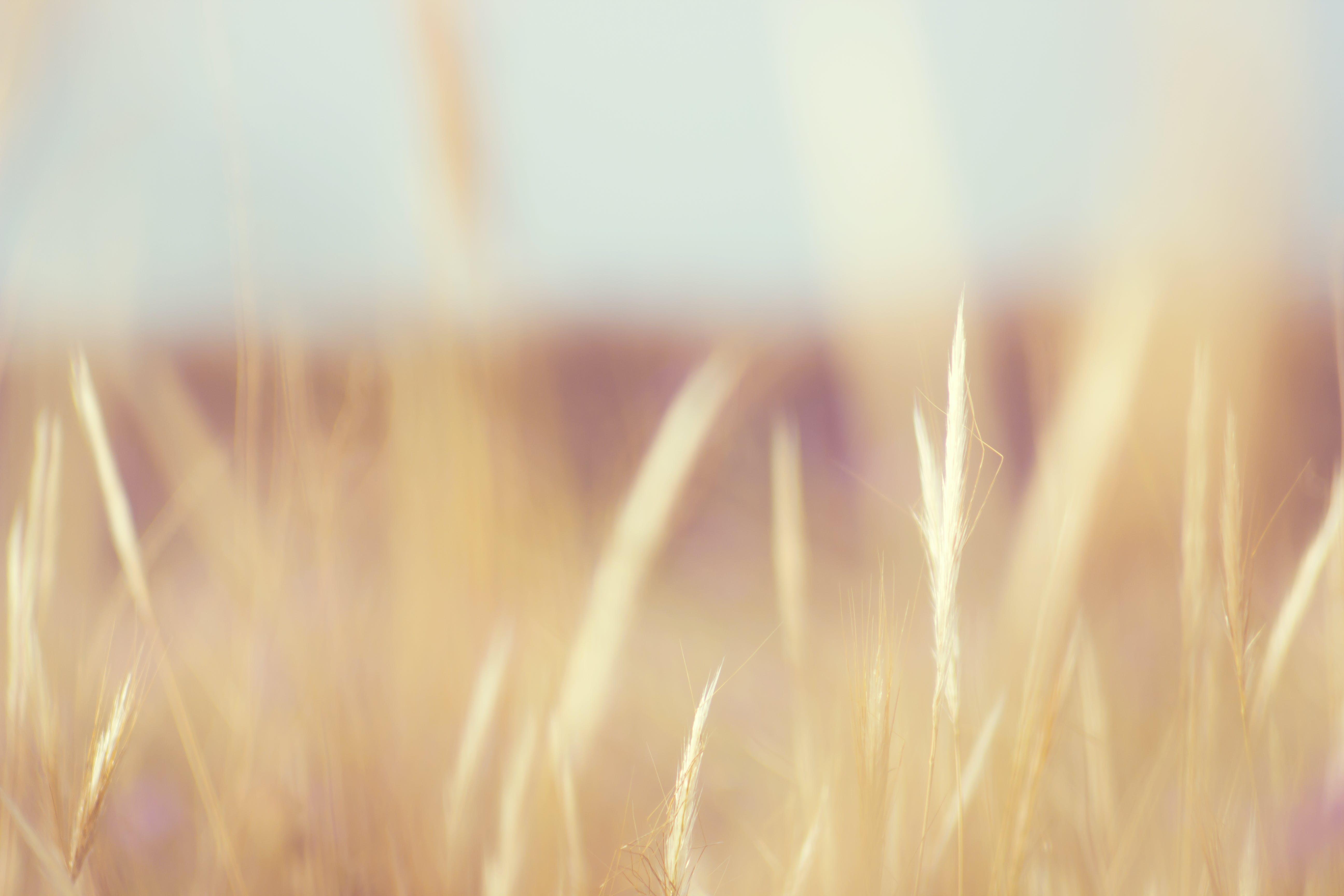 Selective Focus of Green Grass