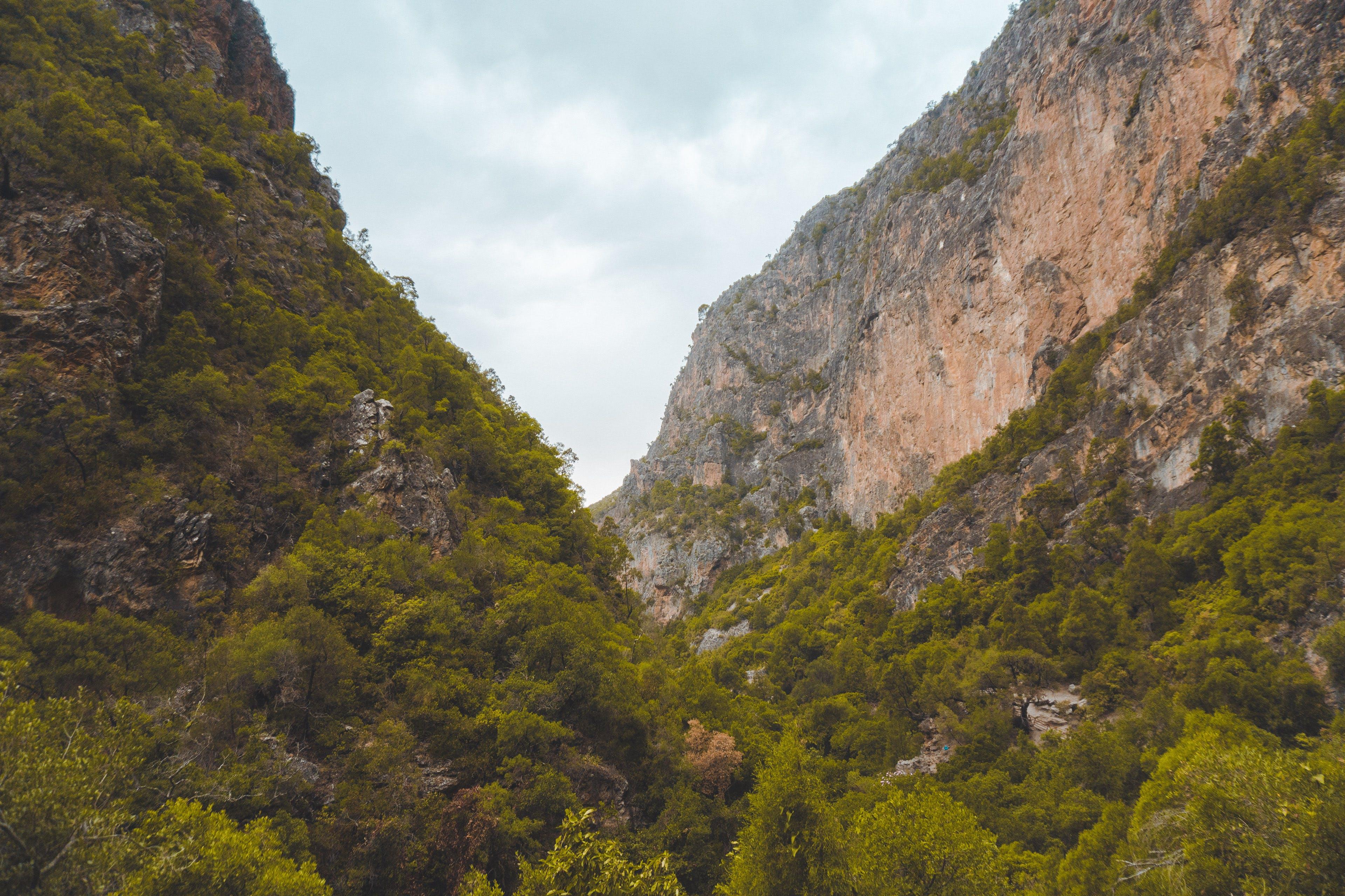 Gratis stockfoto met bergen, bomen, Bos, bossen