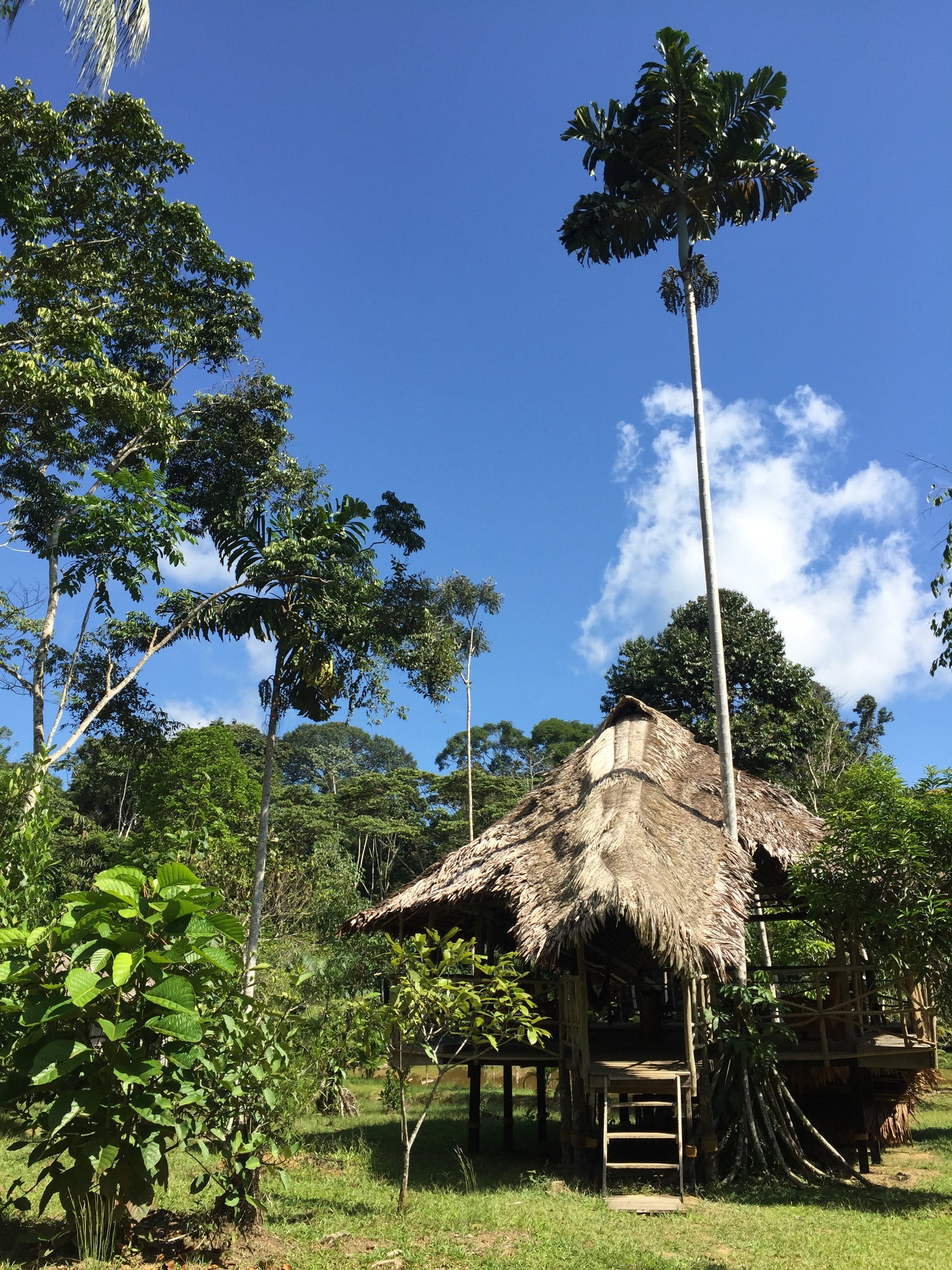 Free stock photo of Amazonian Jungle, DAS Ayahuasca Healing Center, Amazonian