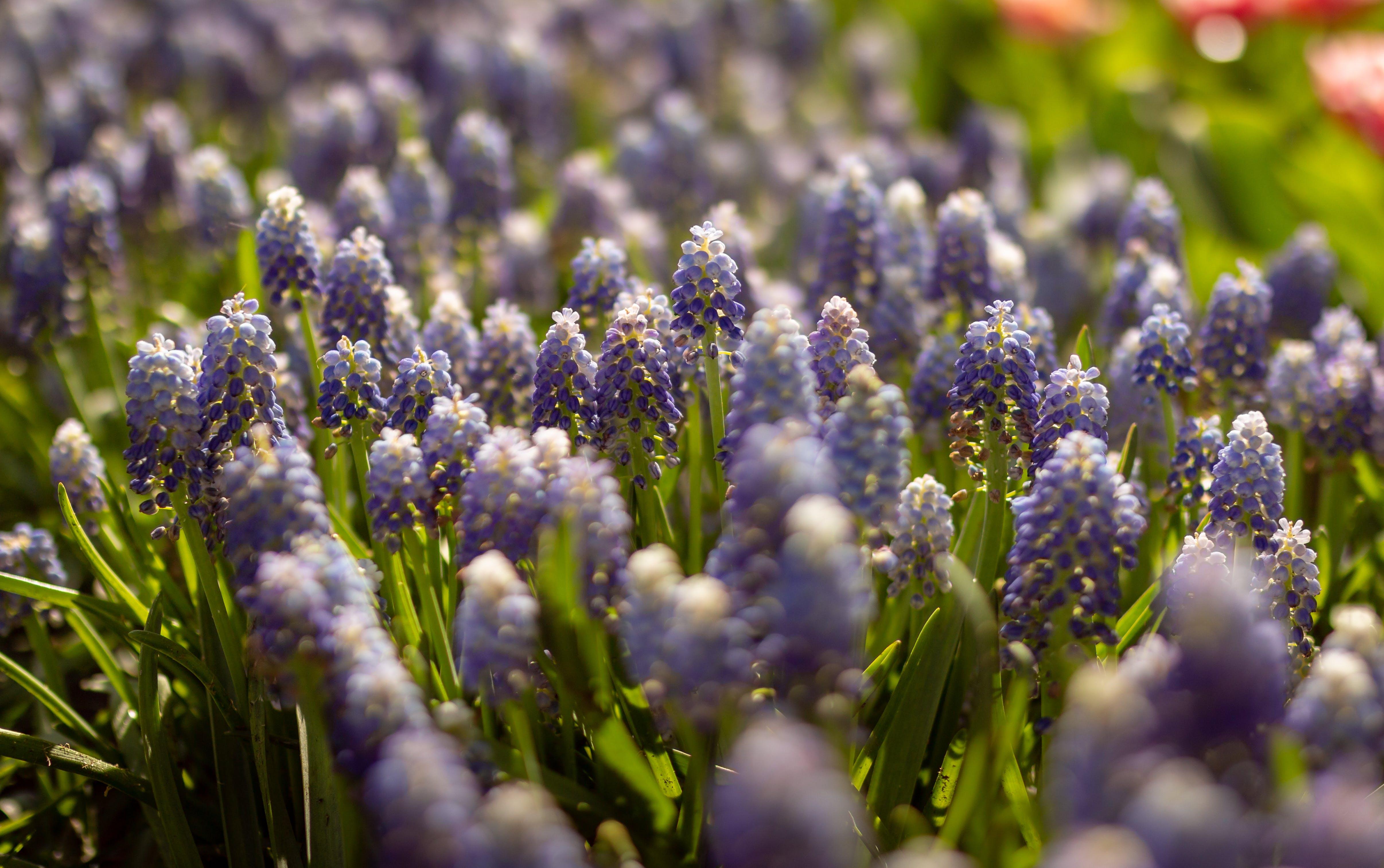 Free stock photo of flower, flower garden, nature, spring