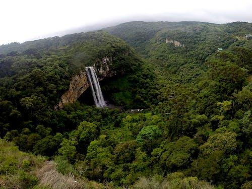 Foto d'estoc gratuïta de cachoeira, canela