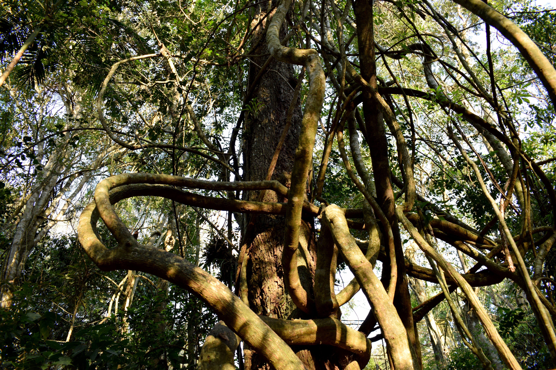 Free stock photo of árvore, mata, tronco