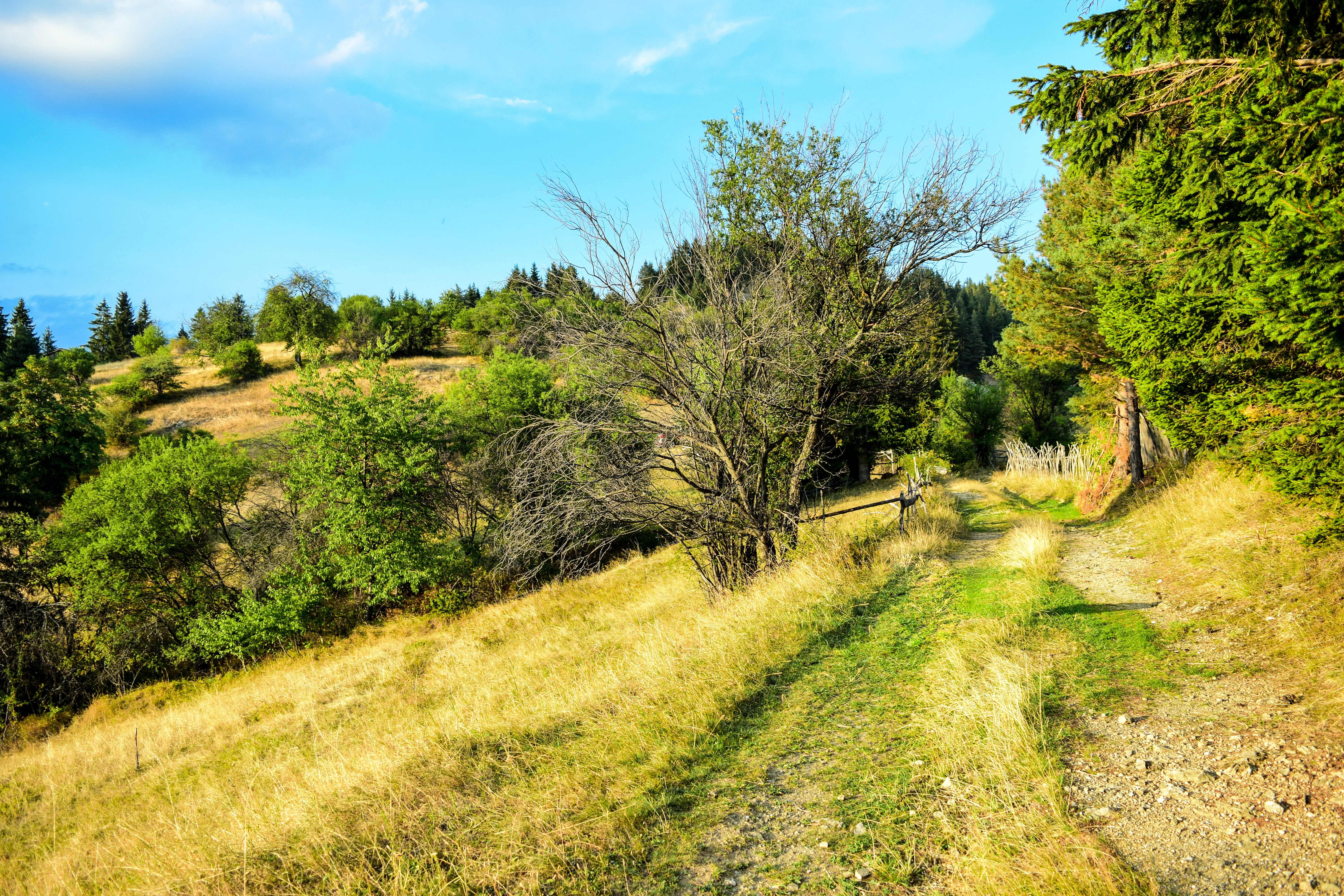 Free stock photo of landscape, trees, green