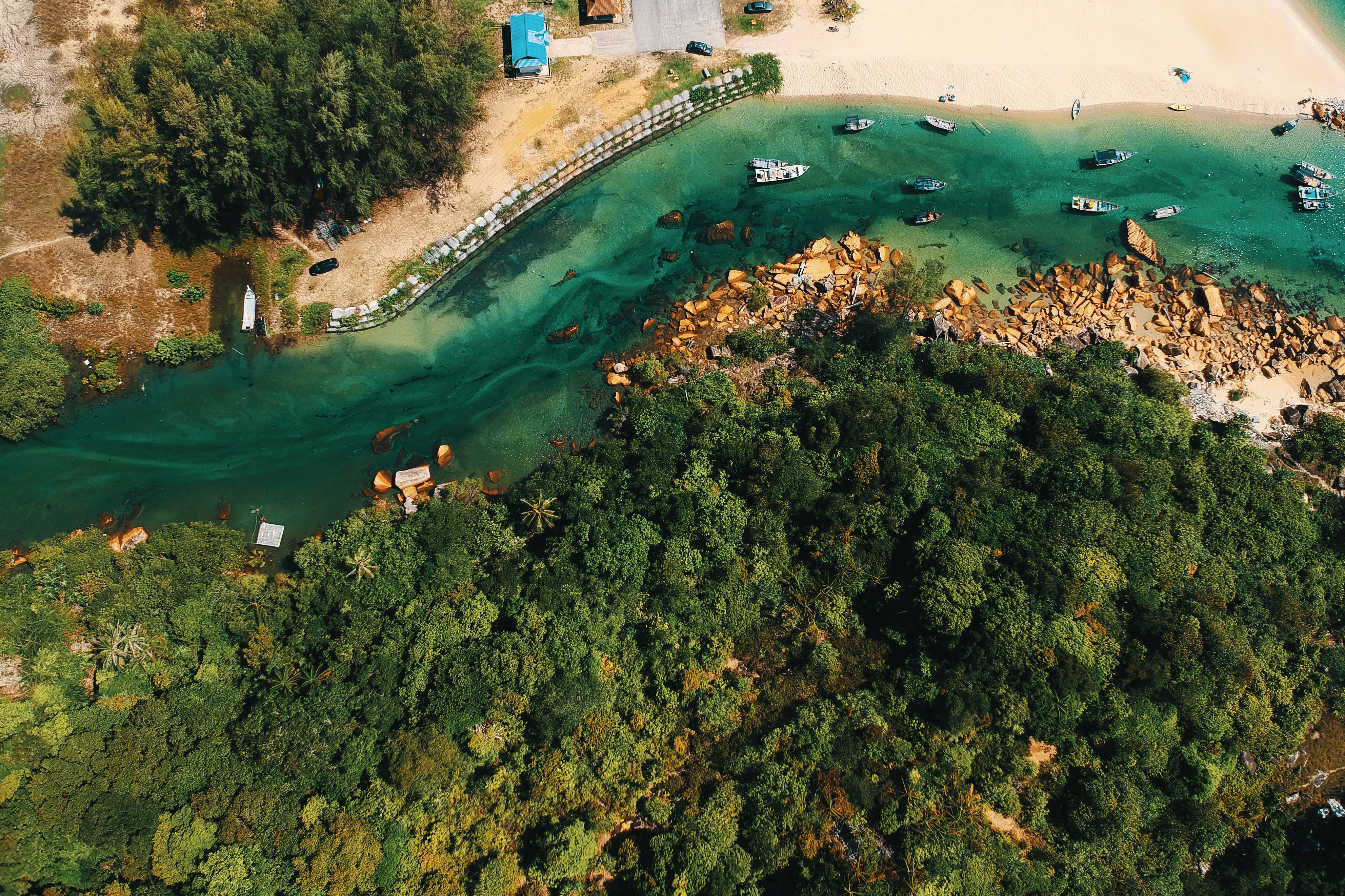 Aerial Photography of Body of Water and Trees