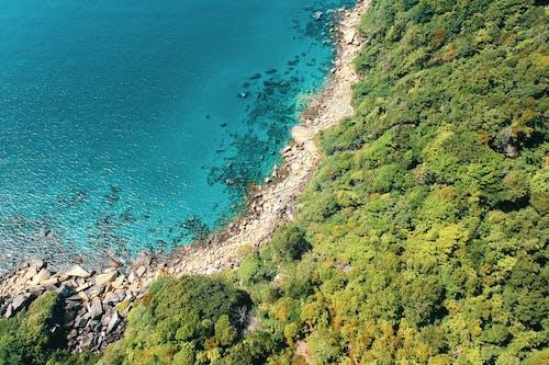 Δωρεάν στοκ φωτογραφιών με ακτή, βράχια, γραφικός, δέντρα
