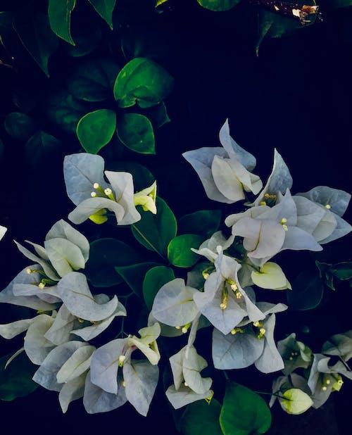 Free stock photo of Adobe Photoshop, botanical garden, canon, couple