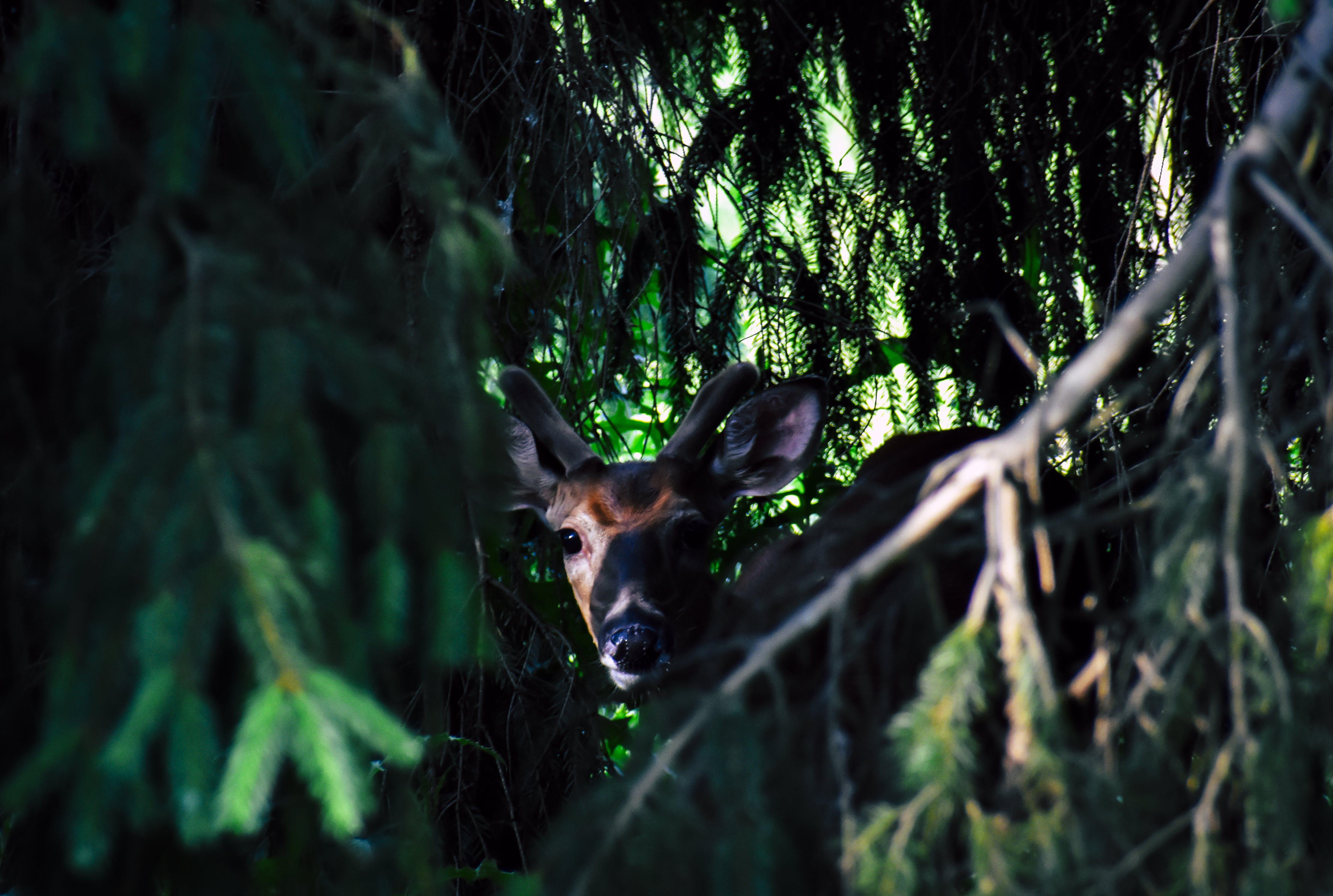 Photo of Brown Deer Near Green Leaf Tree