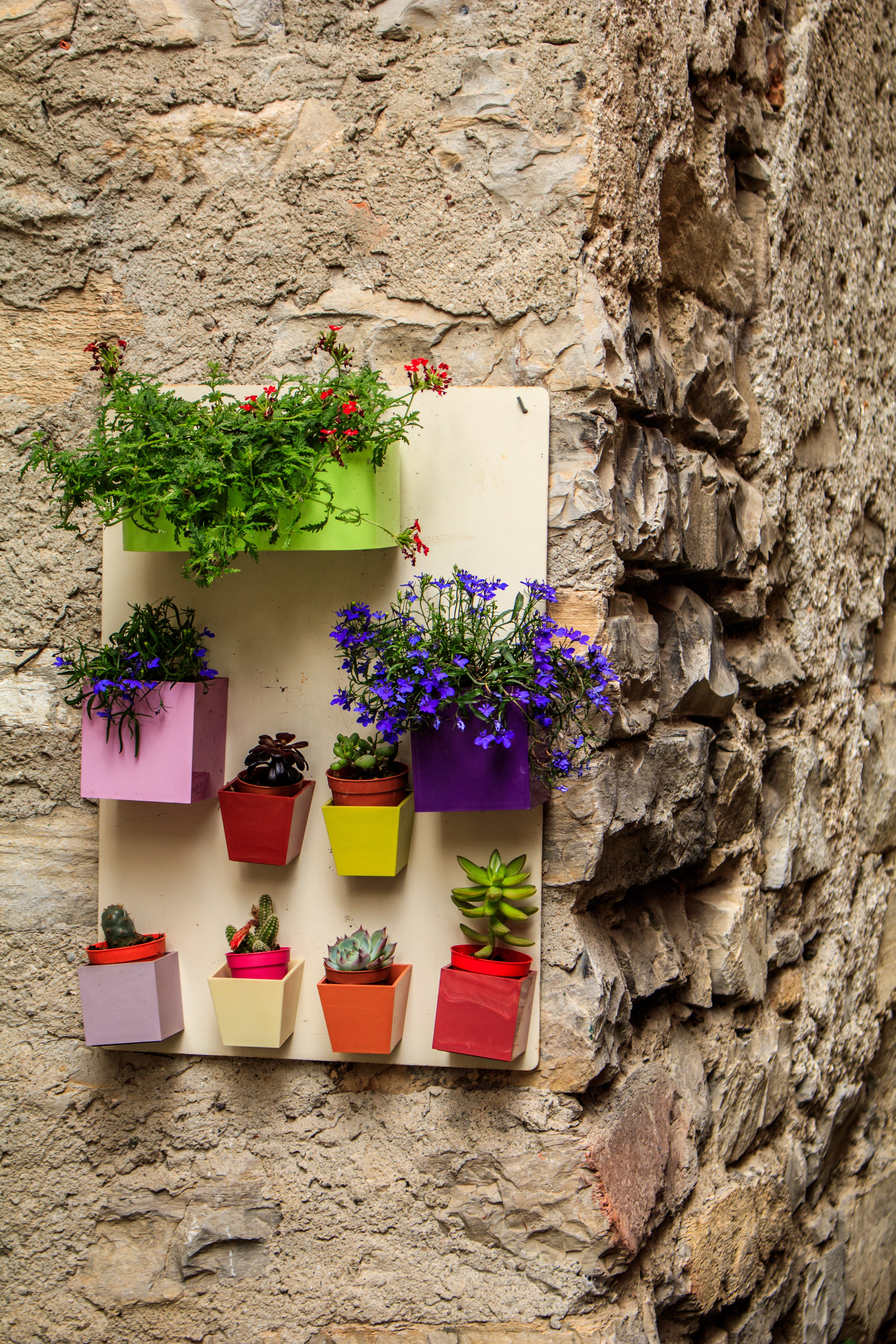 Free stock photo of flowers, wall, stones, colors