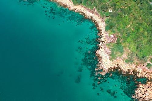 Безкоштовне стокове фото на тему «берег моря, вода, денний час, дерева»