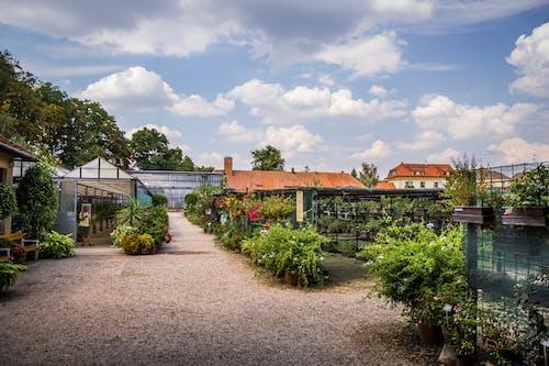 Fotobanka sbezplatnými fotkami na tému botanická záhrada, kvetinová záhrada