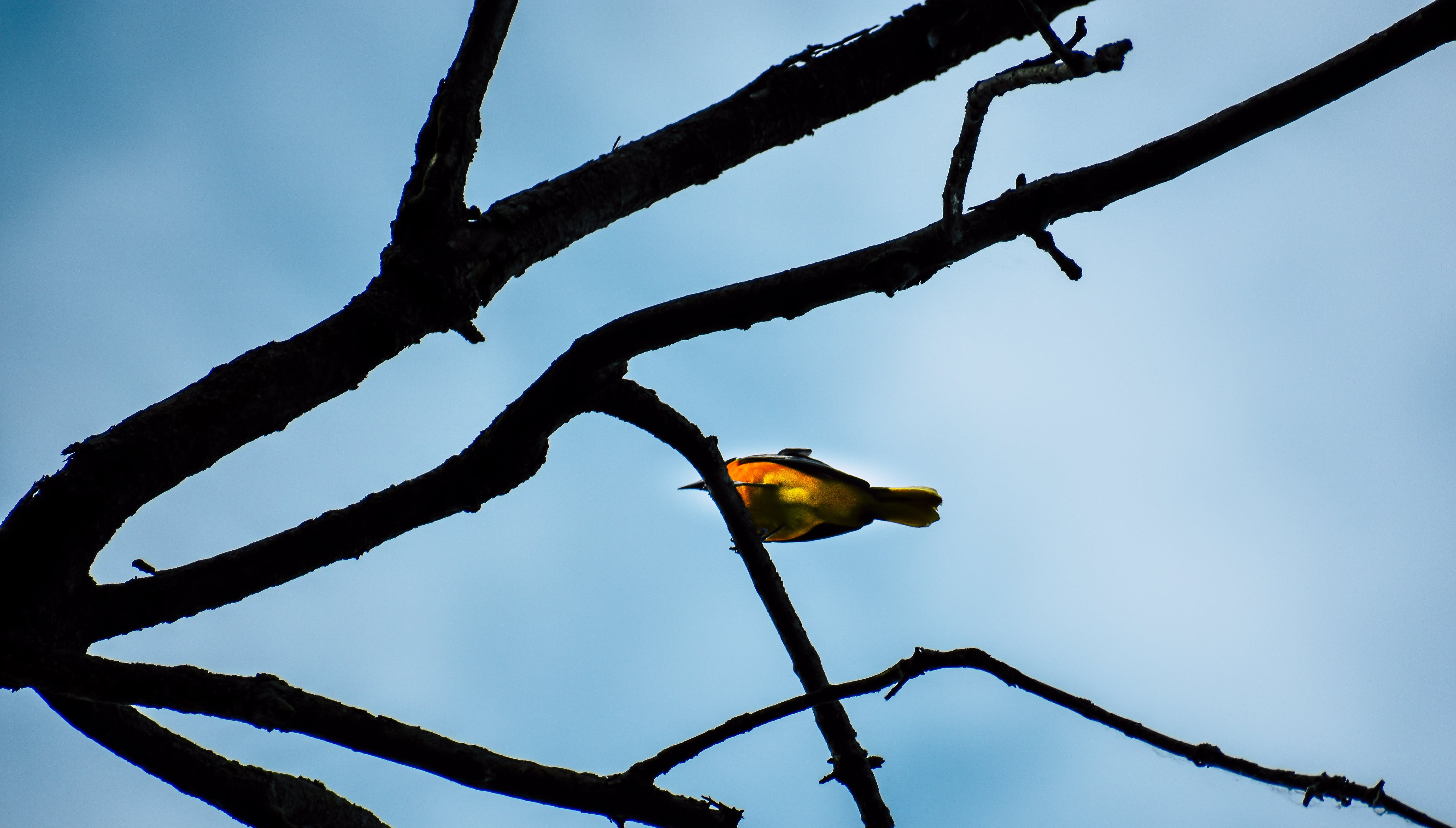 Shallow Focus Photography of Yellow Bird on Brown Tree Branch
