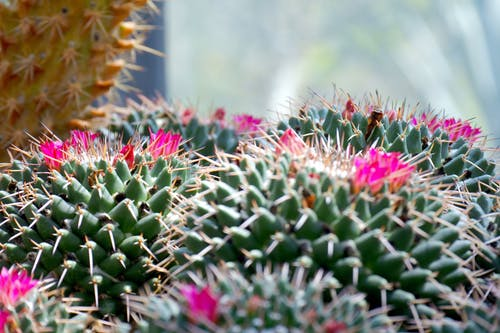 Shallow Focus Photography of Cactus
