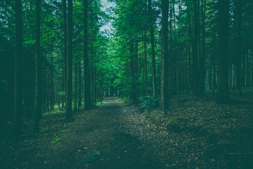 Free stock photo of forest, nature, outdoors, path