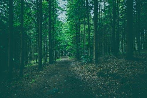 Gratis lagerfoto af natur, skov, sti, træer