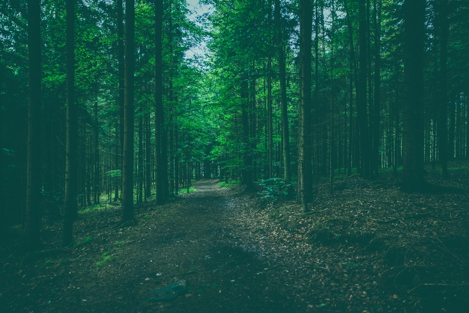 forest, nature, outdoors