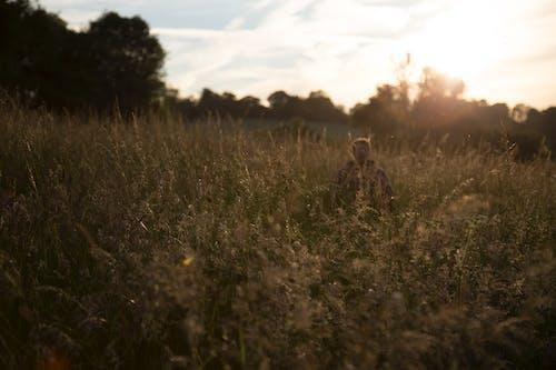 人, 夏天, 夏季 的 免费素材图片