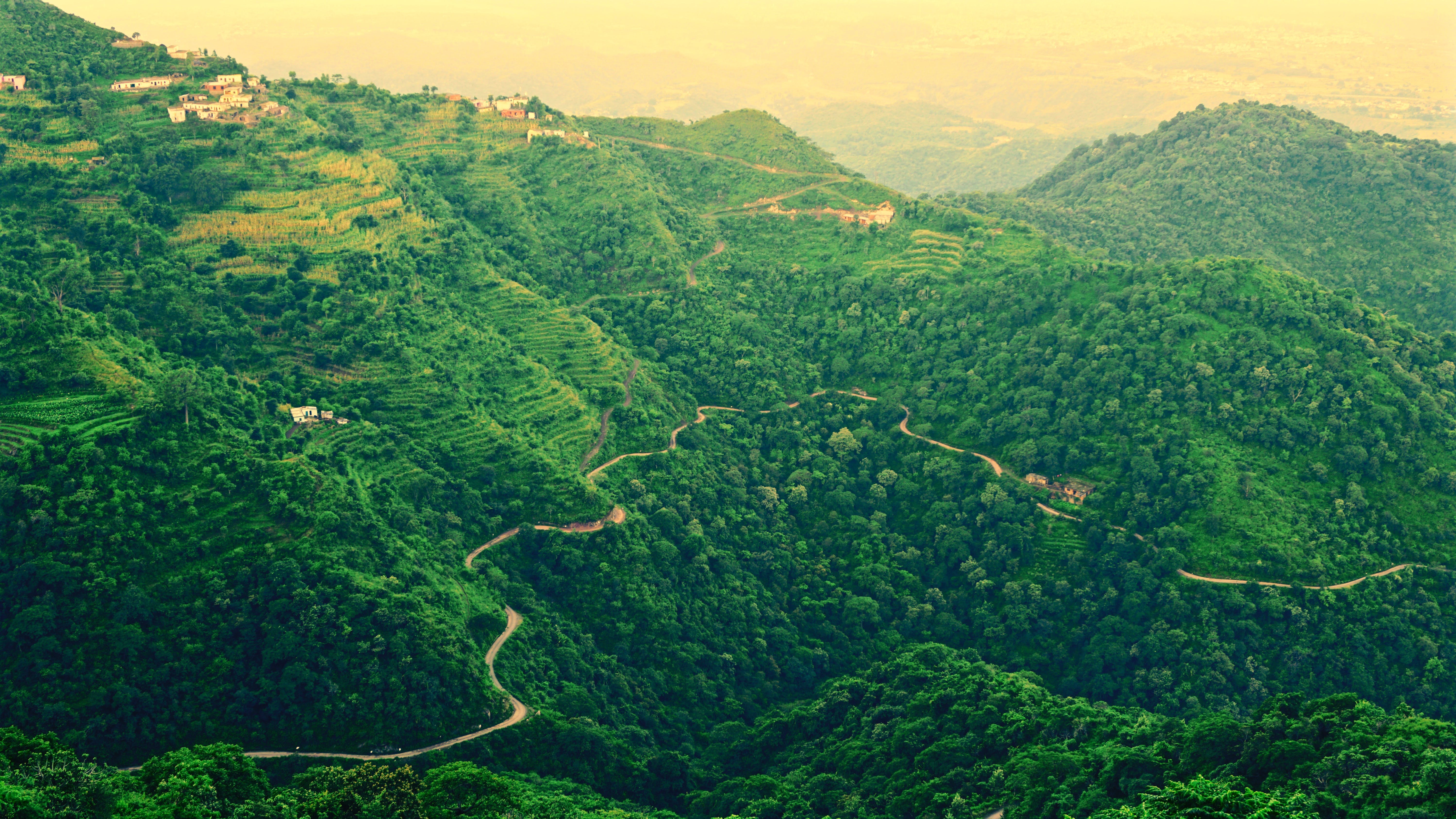 Landscape Photo of Roadway Covered in Green Trees