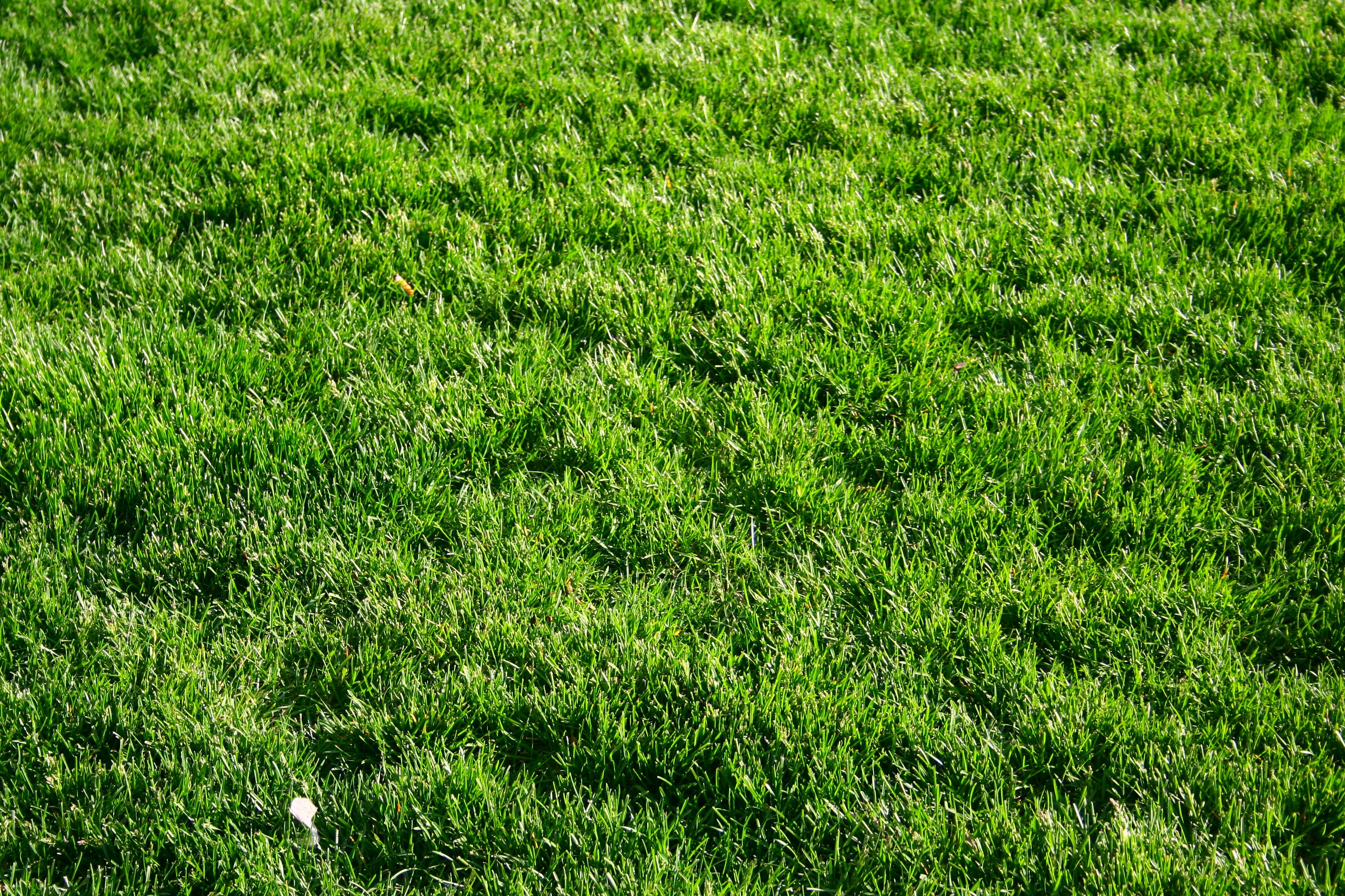 Free stock photo of grass, green, lawn