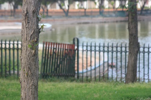 Ilmainen kuvapankkikuva tunnisteilla luonto, puu, vesi