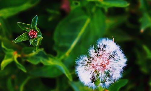 Бесплатное стоковое фото с природная красота
