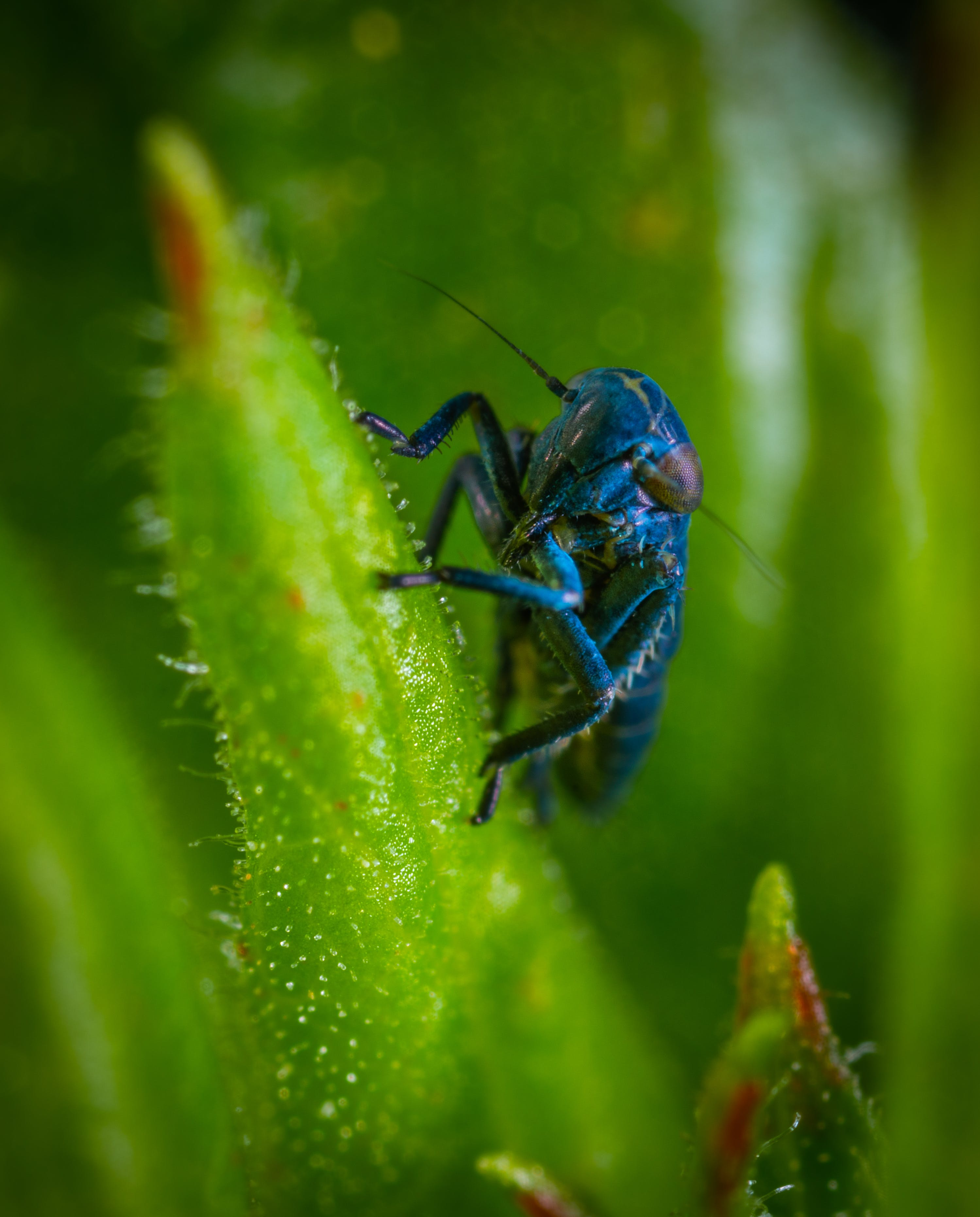 Blue Insect