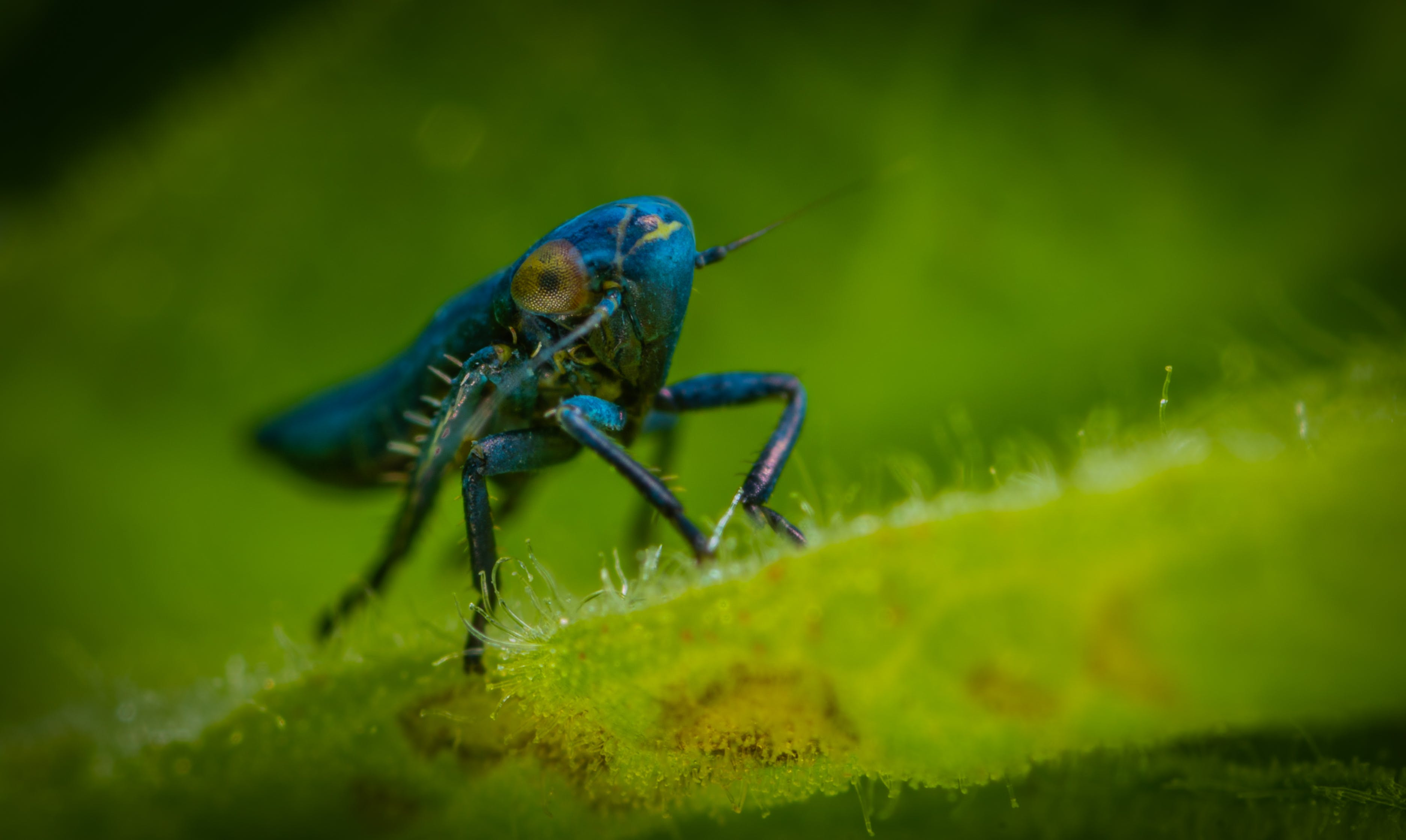 Blue Insect in Close-up Photography