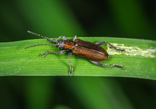 Brown and Black Bug