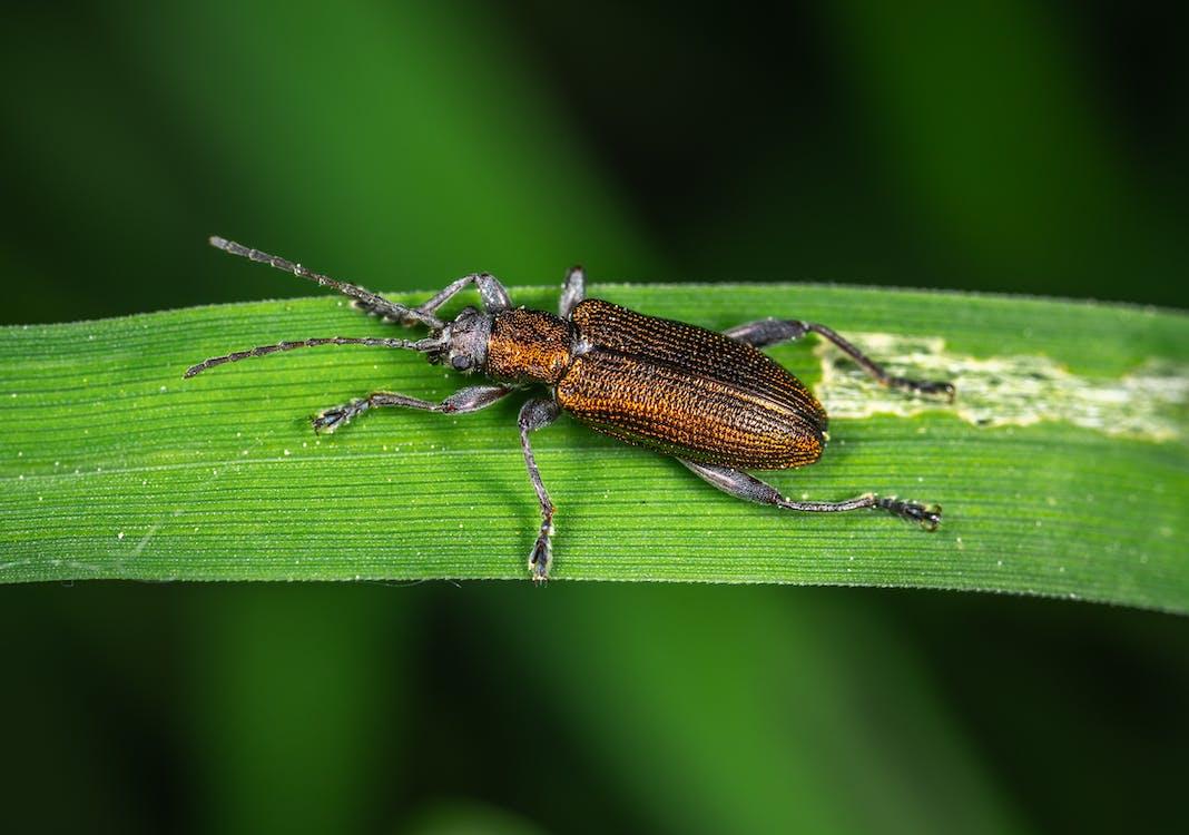 beest, close-up, detailopname