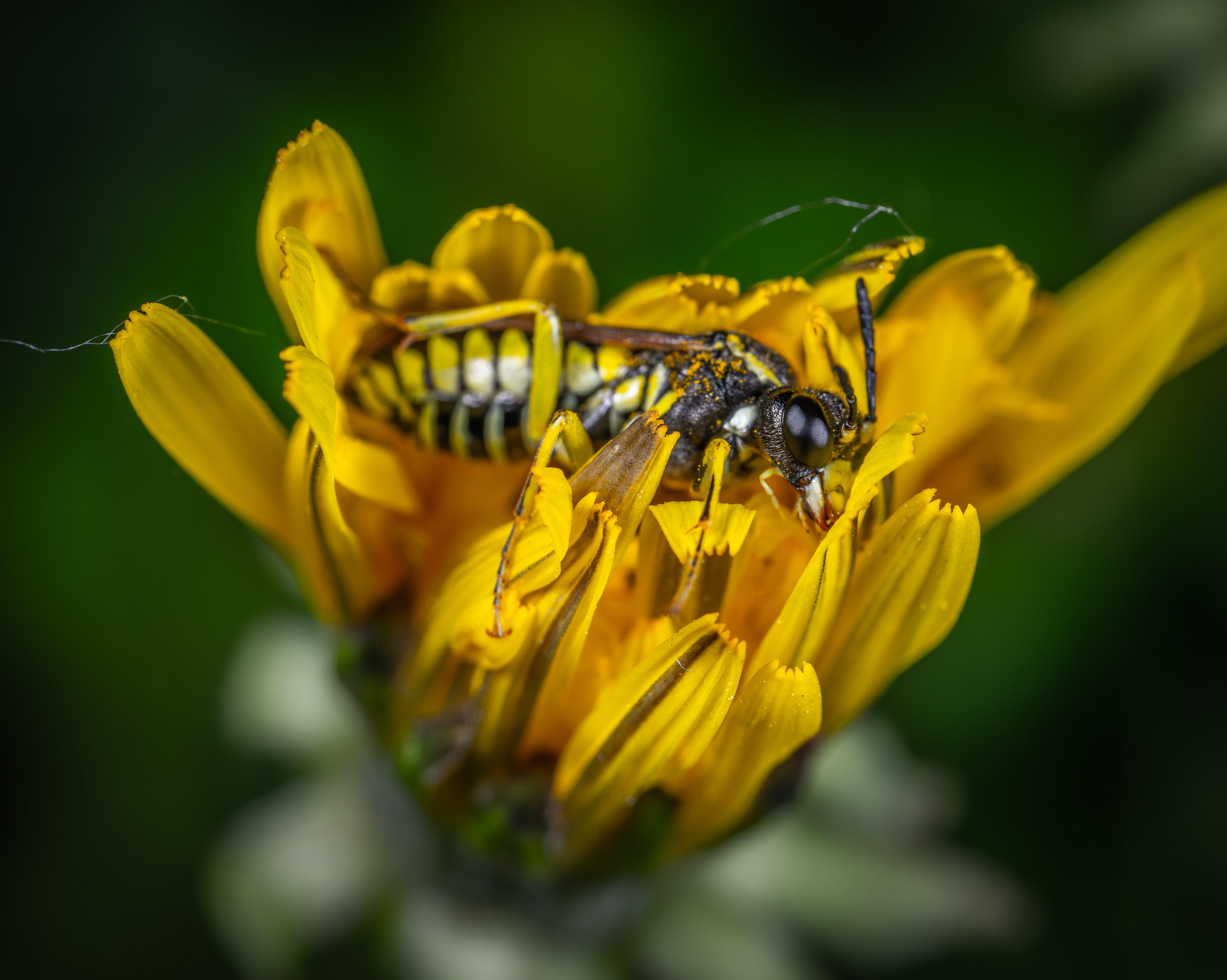 Bee on Yellow Petaled Flower