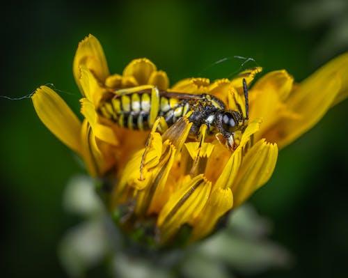 Ilmainen kuvapankkikuva tunnisteilla ampiainen, eläin, hyönteinen, kasvikunta