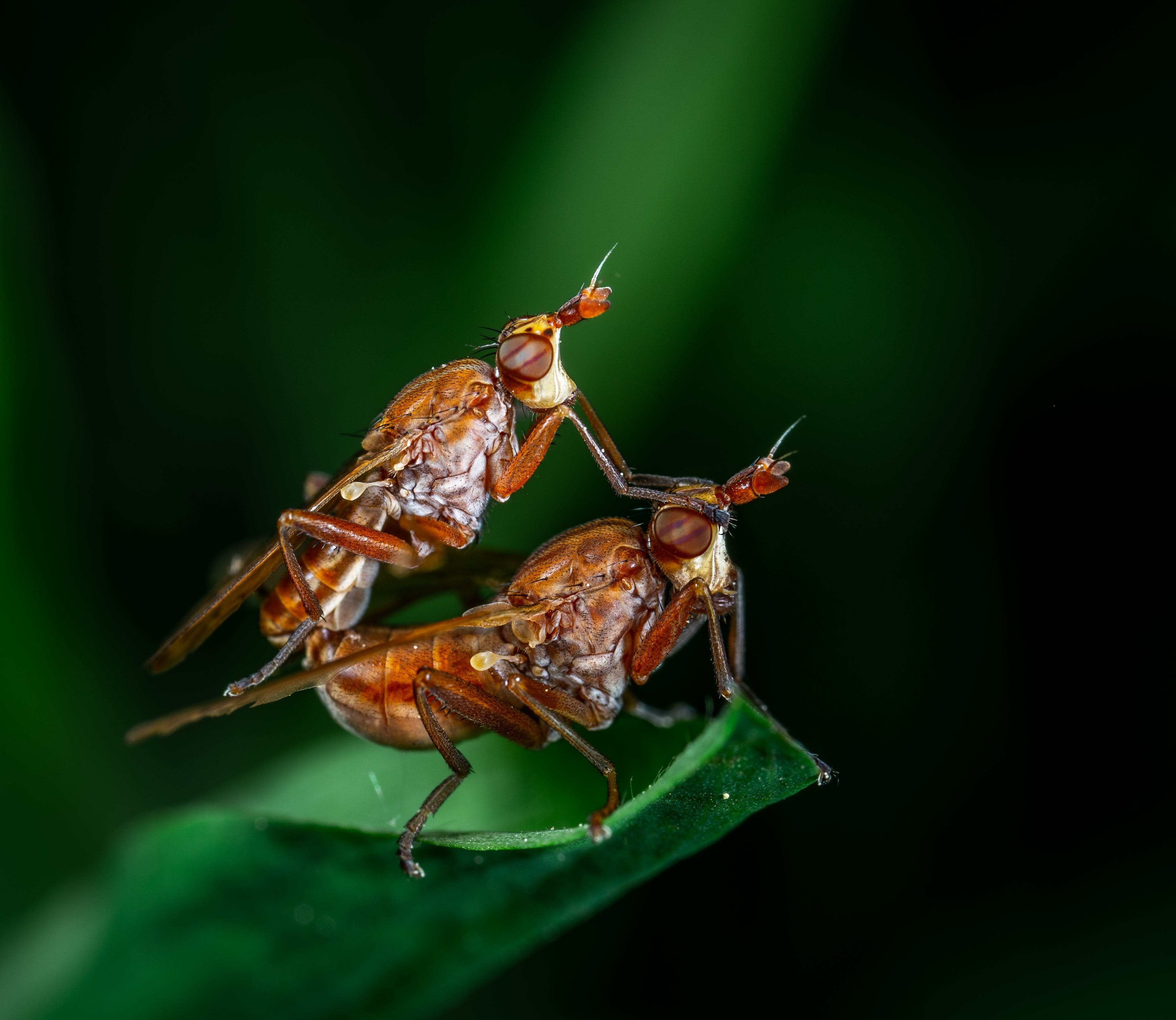 Macro Photography of Two Fly on Leaf