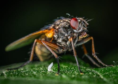 Macro Photography of Gray Fly
