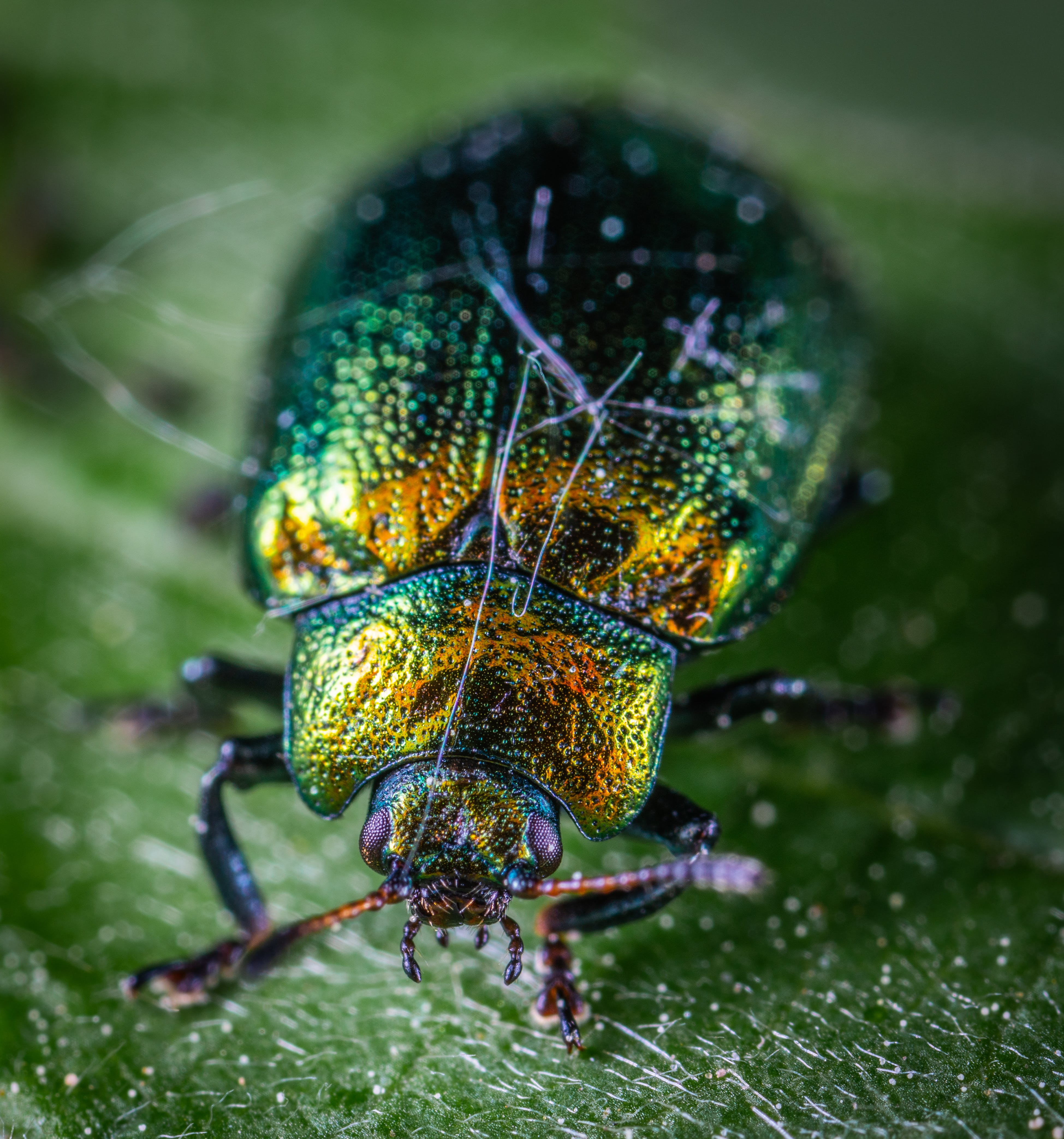 Close Shot of Green and Yellow Beetle