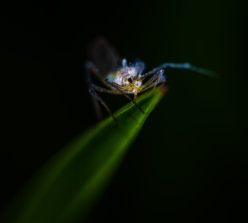 Blue and Gray Insect on Green Leaf