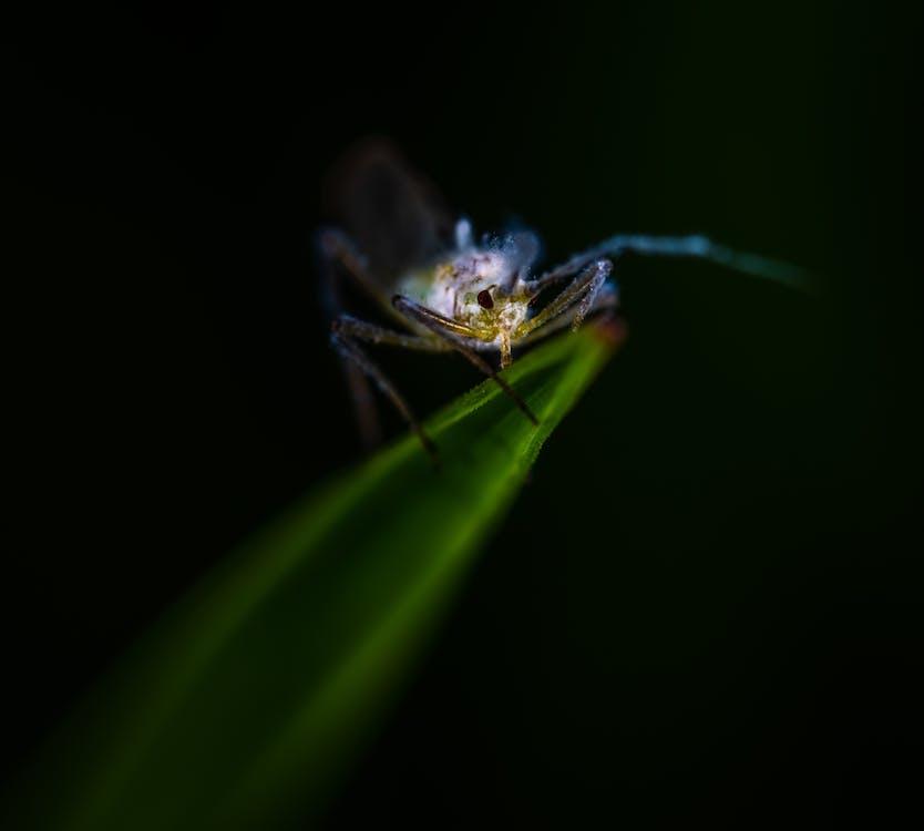 entomologie, farbe, insekt