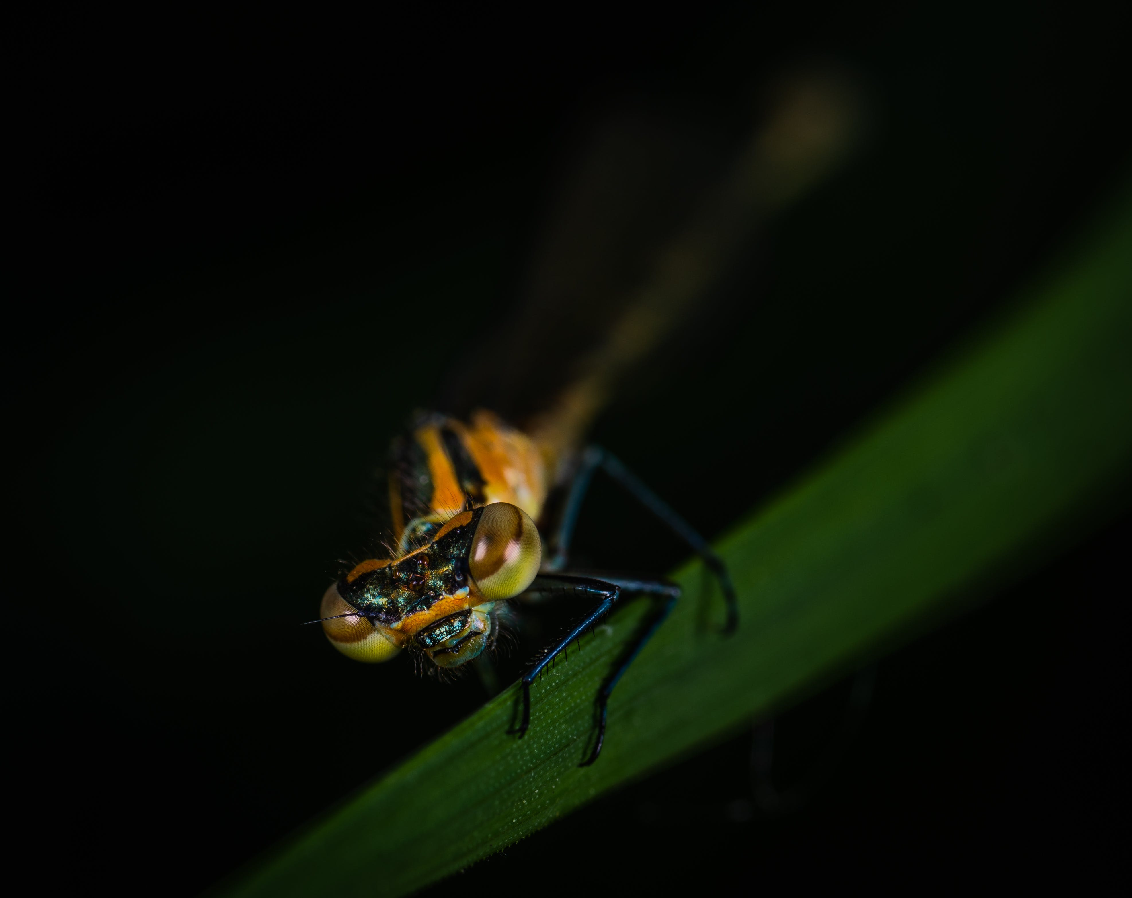 Closeup Photo of Yellow and Black Insect on Green Leaf
