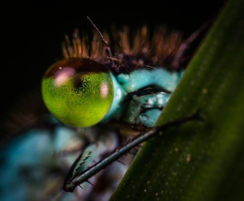 Foto stok gratis cahaya, capung, flora, fotografi makro